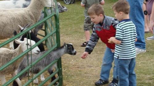 Clonfert Pet Farm Featured Photo