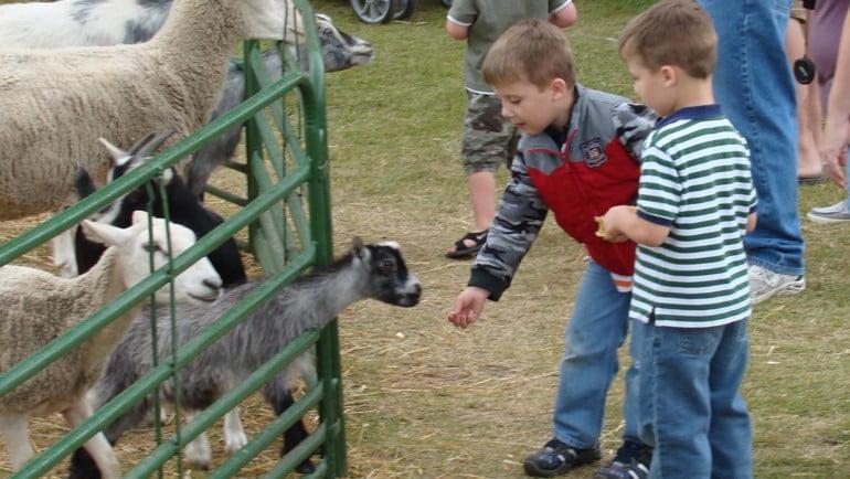 Clonfert Pet Farm Featured Photo | Cliste!