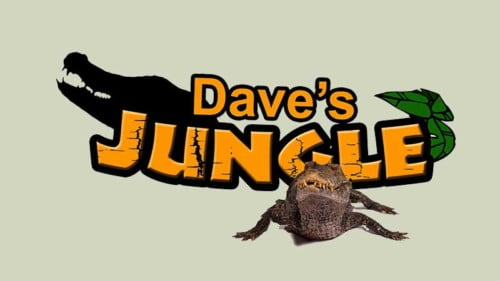 Dave's Jungle Featured Photo