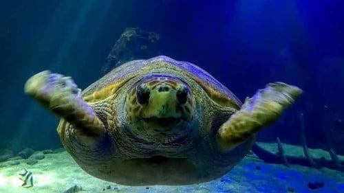 Dingle Oceanworld Featured Photo