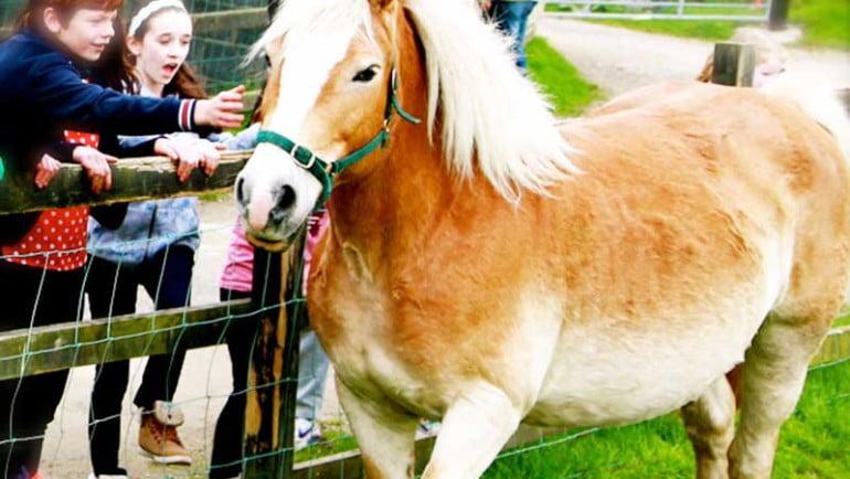 Loughwell Farm Park Featured Photo | Cliste!