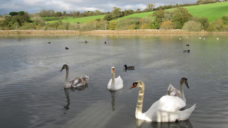 Cuskinny Nature Reserve Featured Photo   Cliste!