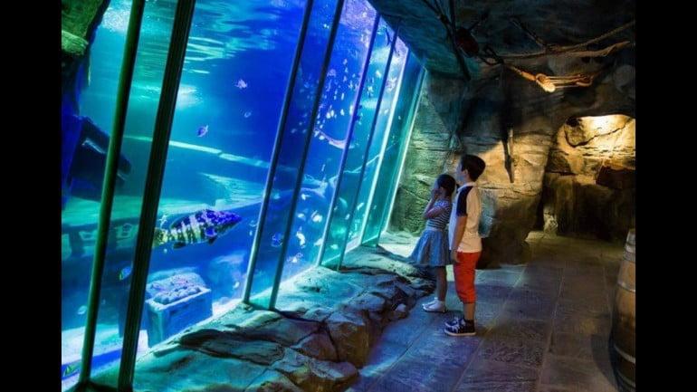 Exploris Aquarium Featured Photo | Cliste!