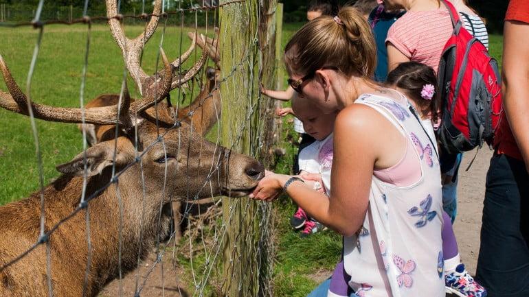 Streamvale Open Farm Featured Photo   Cliste!